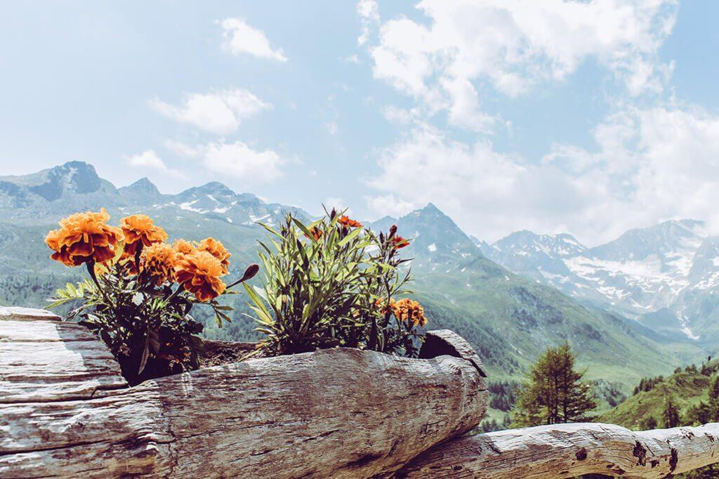 Blumen in Holzstamm auf der Glaneggalm