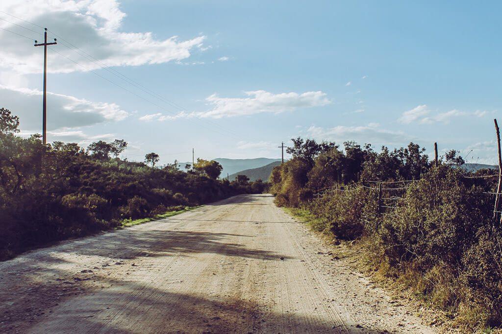 eine Schotterpiste mit Gewaechsen am Wegesrand