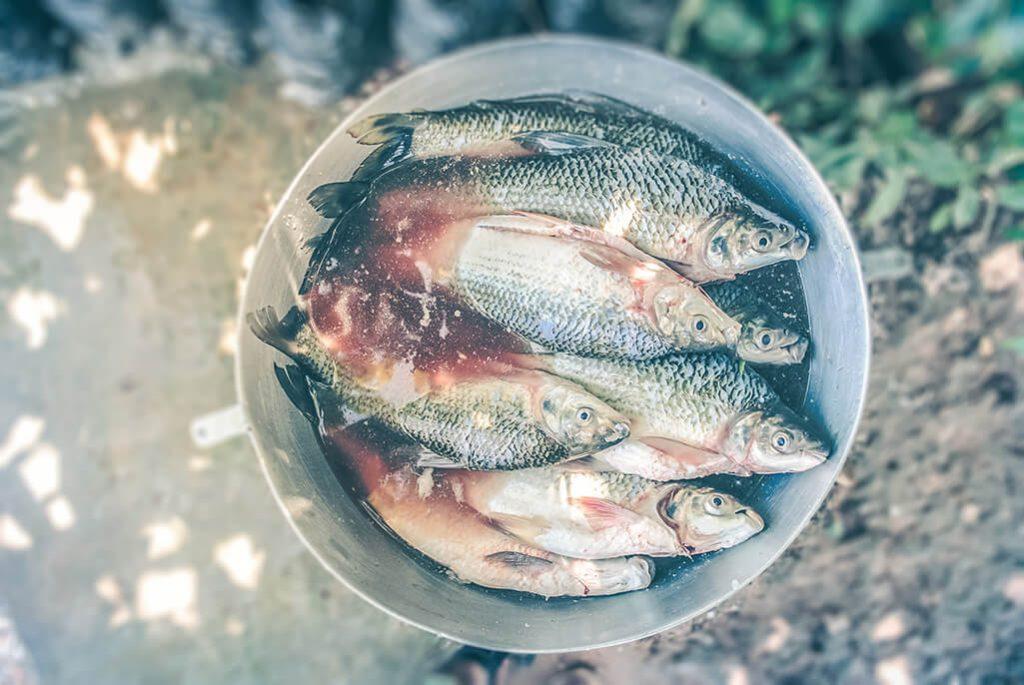 Fisch am Chiemsee