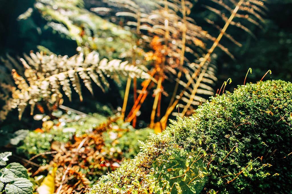 Pflanzen im Uttewalder Grund