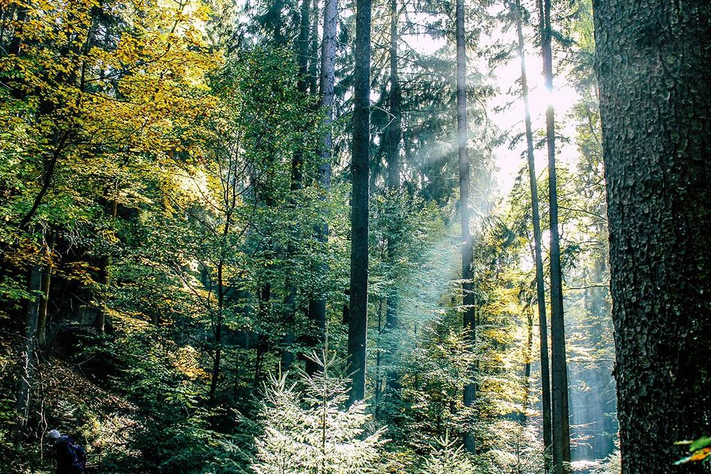 Wald im Uttewalder Grund