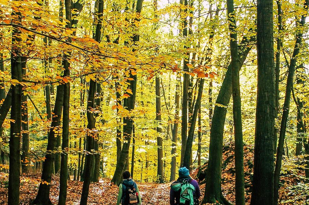 Wanderung auf dem Malerweg im Herbst