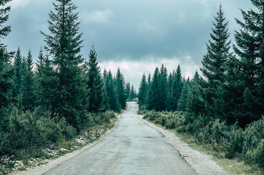 Strasse im Wald in Montenegro