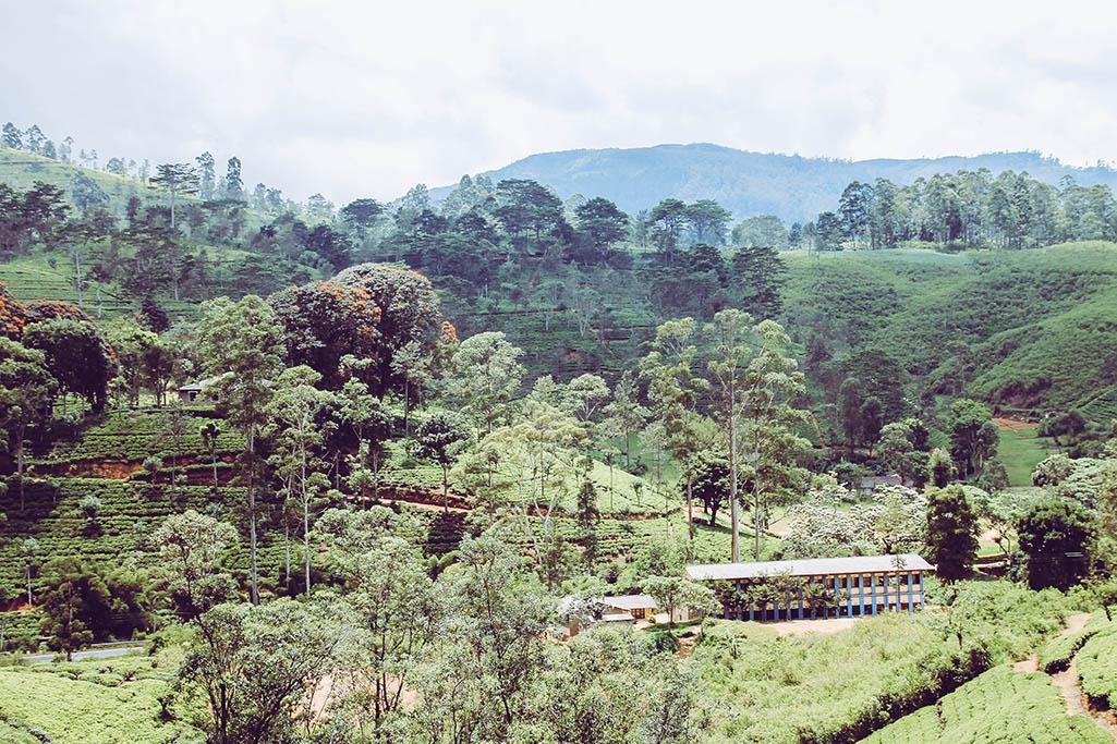 Landschaft im Hochland Sri Lankas