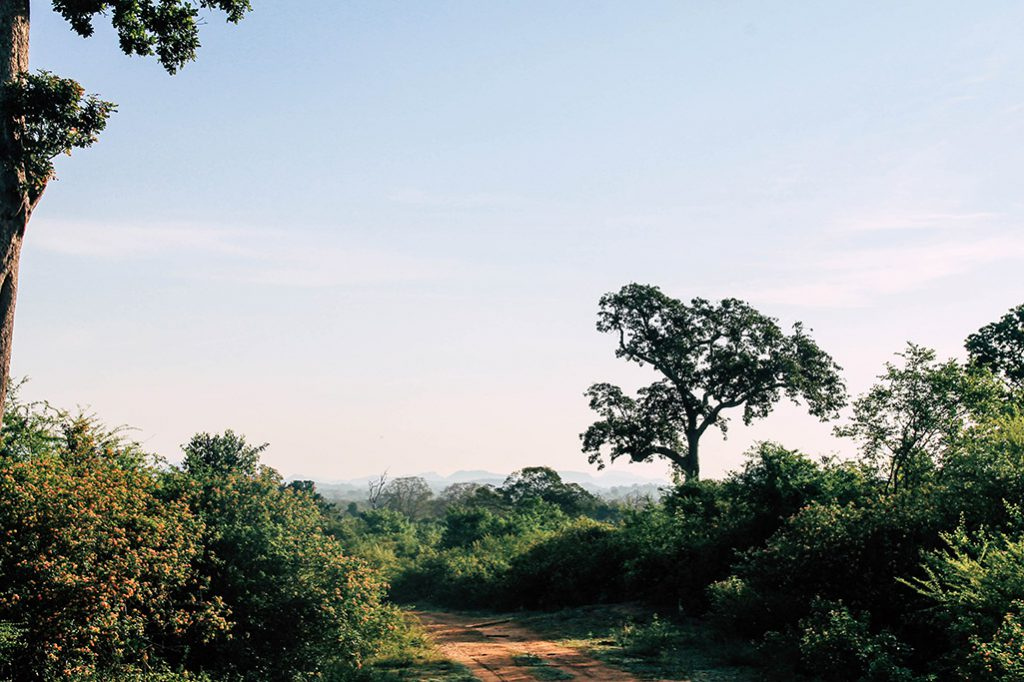 Landschaft im Udawalawe Nationalpark