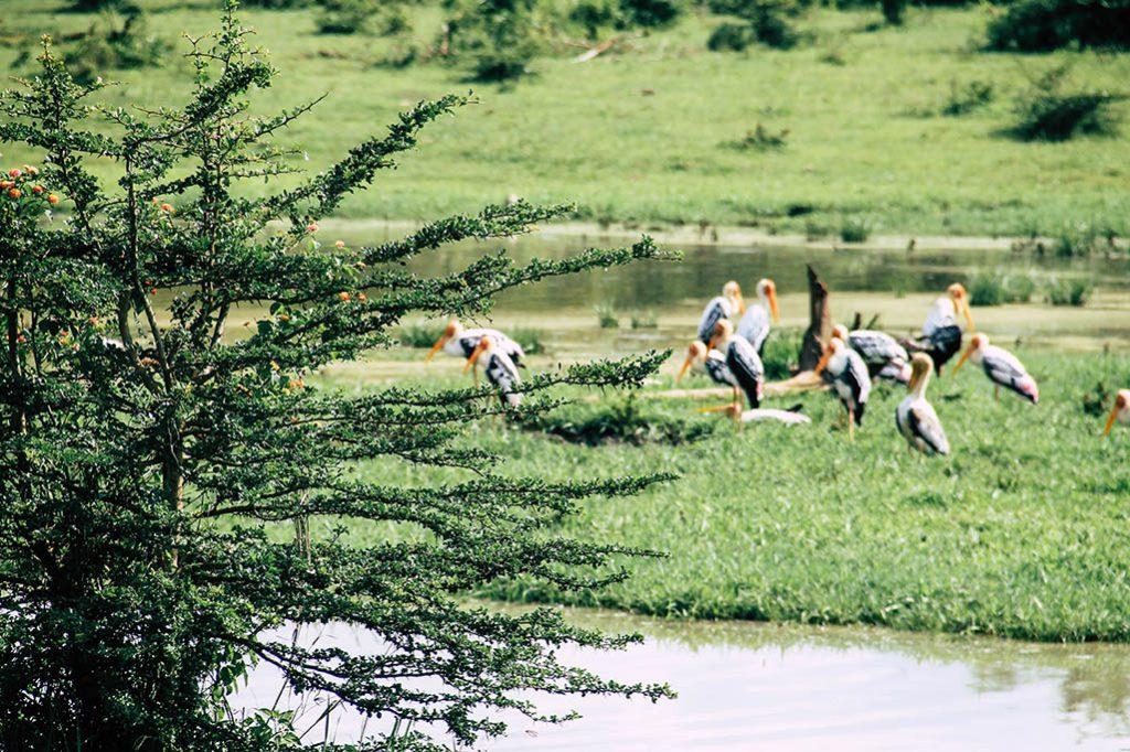Vögel am See im Nationalpark