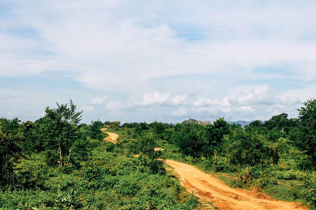 Eine kleine Nebenstraße im Udawalawe Nationalpark