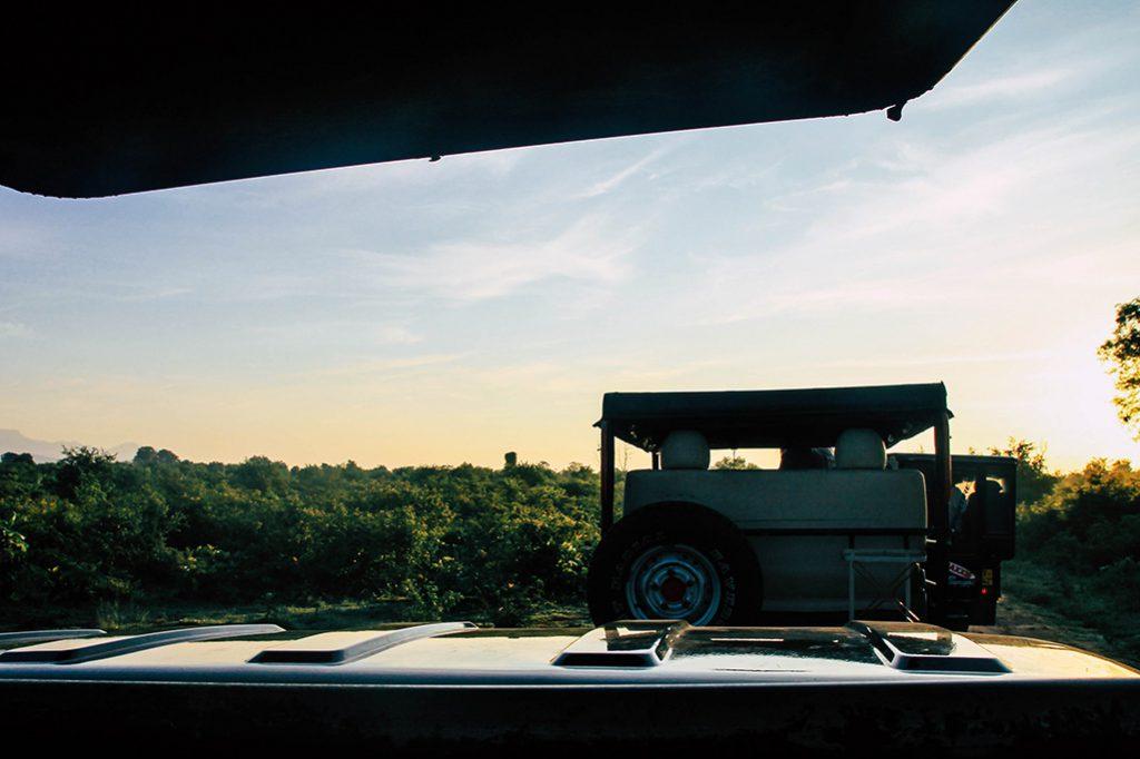 Mehrere Autos hintereinander auf Safari Tour