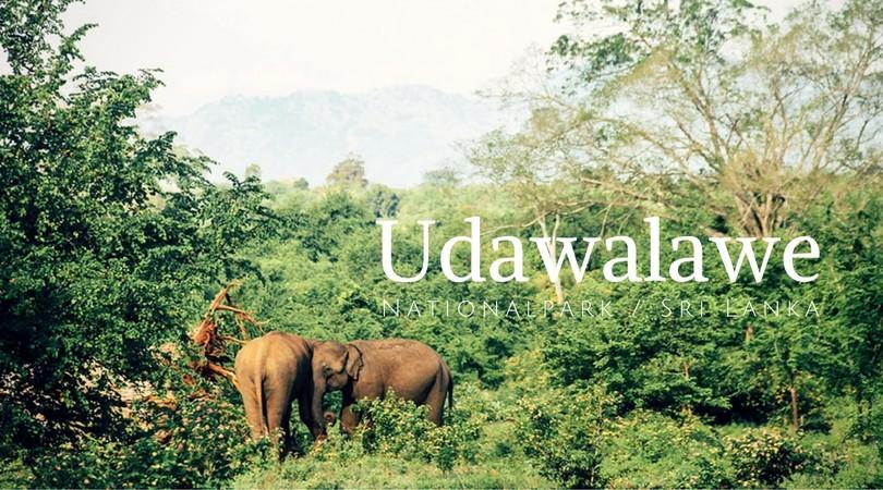 Eine Safari im Udawalawe Nationalpark: Auf Elefantensuche in Sri Lanka // take an adVANture