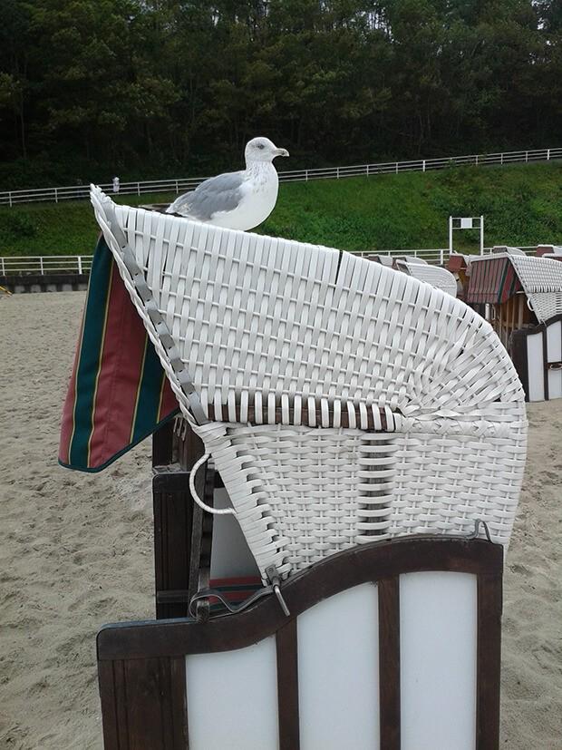 Moewe und Strandkorb auf Ruegen