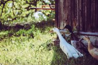 Naturprodukte Titelbild Artikel