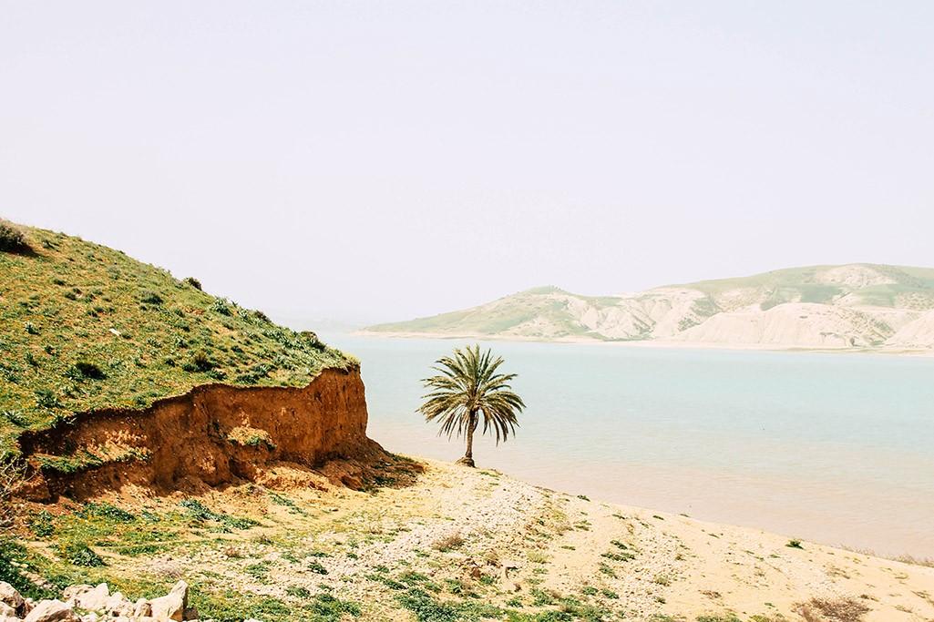 einzelne Palme am Barrage Idriss