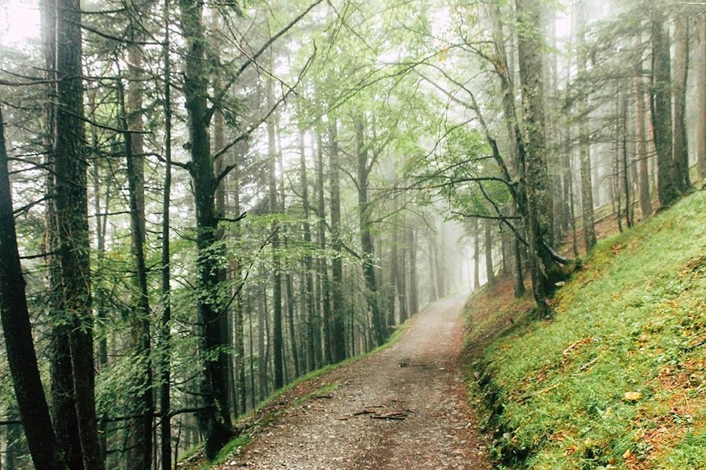 Forstweg auf der 14. Etappe des Adlerwegs
