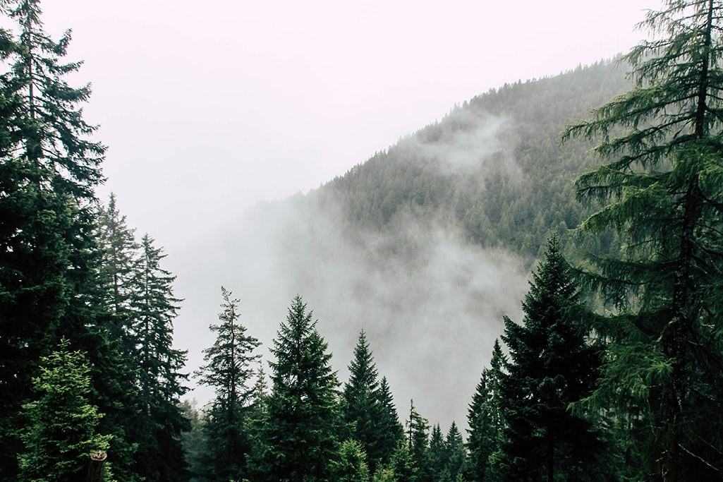 Blick auf Nebelwand am Adlerweg
