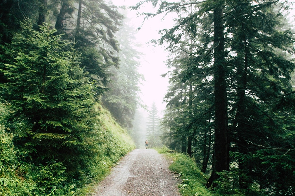 nebliger Waldweg