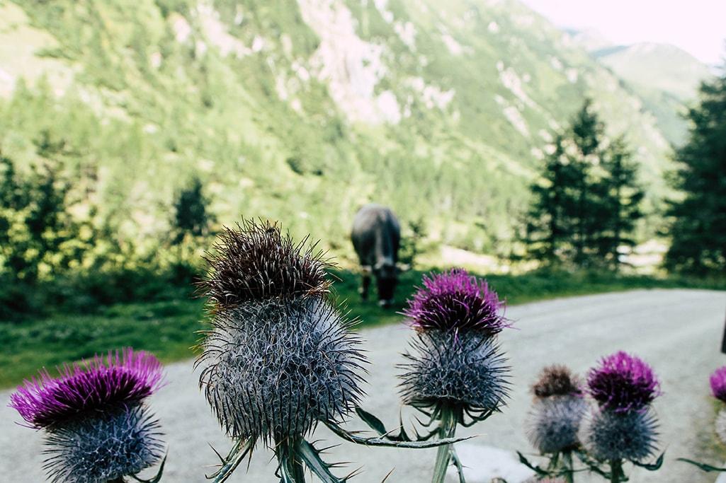 Nahaufnahme von Blumen im Dorfertal