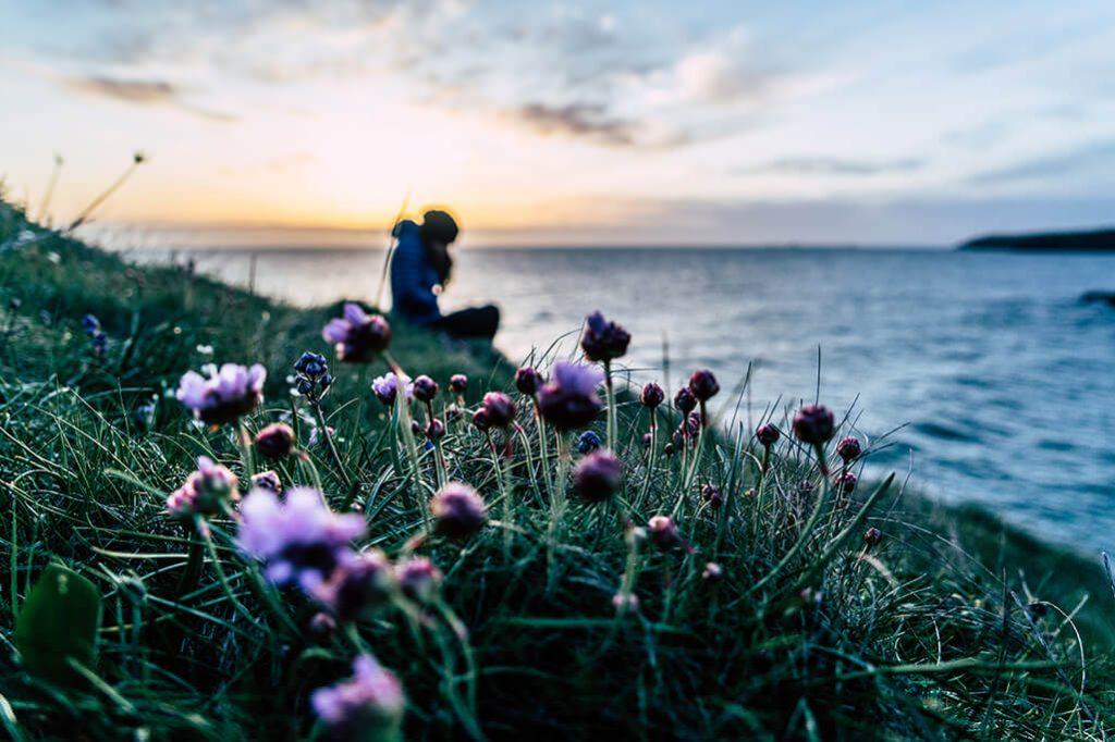 Blumenwiese im Sonnenuntergang am Meer auf der Insel Anglesey