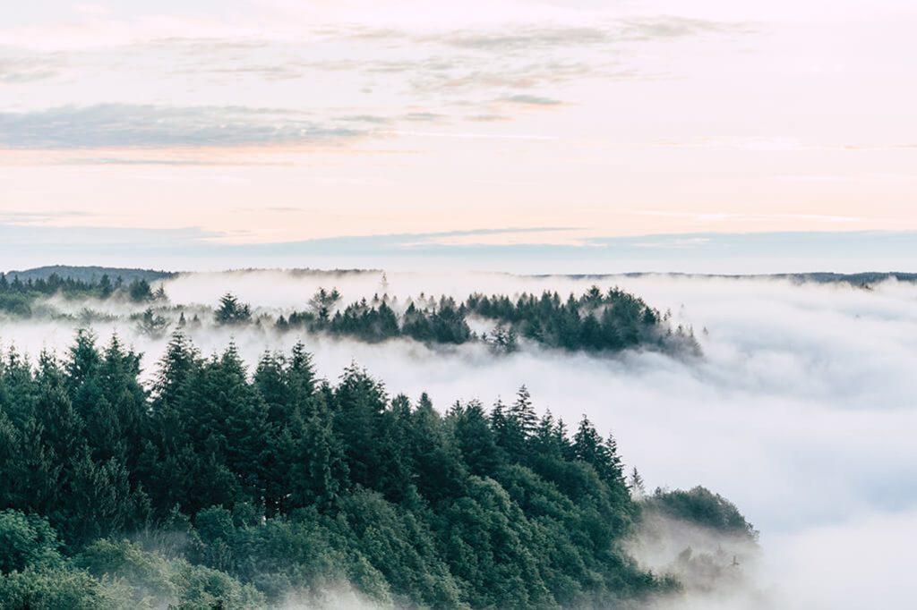Nebel ueber dem Naturpark Saar-Hunsrueck