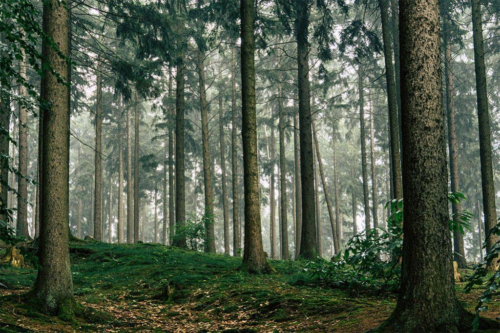 Wald bei Waldhoelzbach