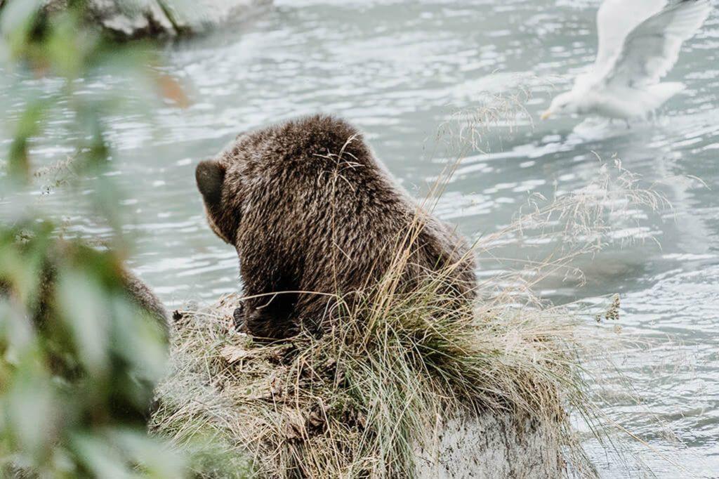 Baerensicherheit im Yukon