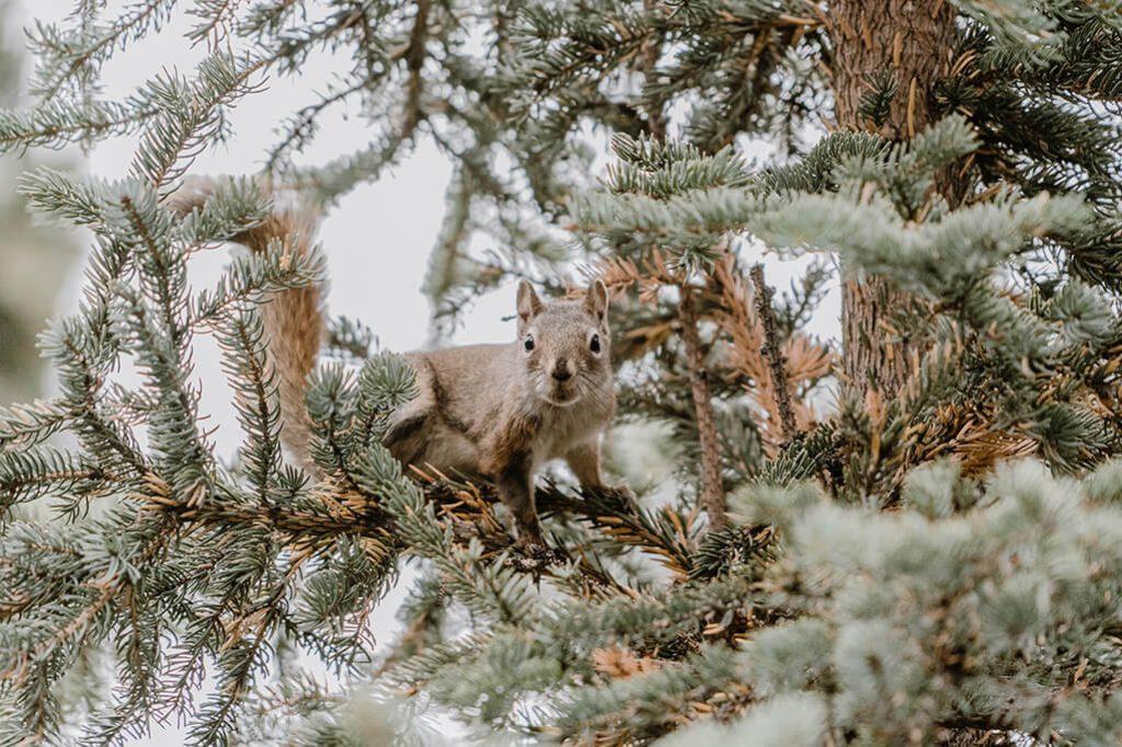 Eichhoernchen in Kanada mit der Sony Alpha 7ii fotografiert