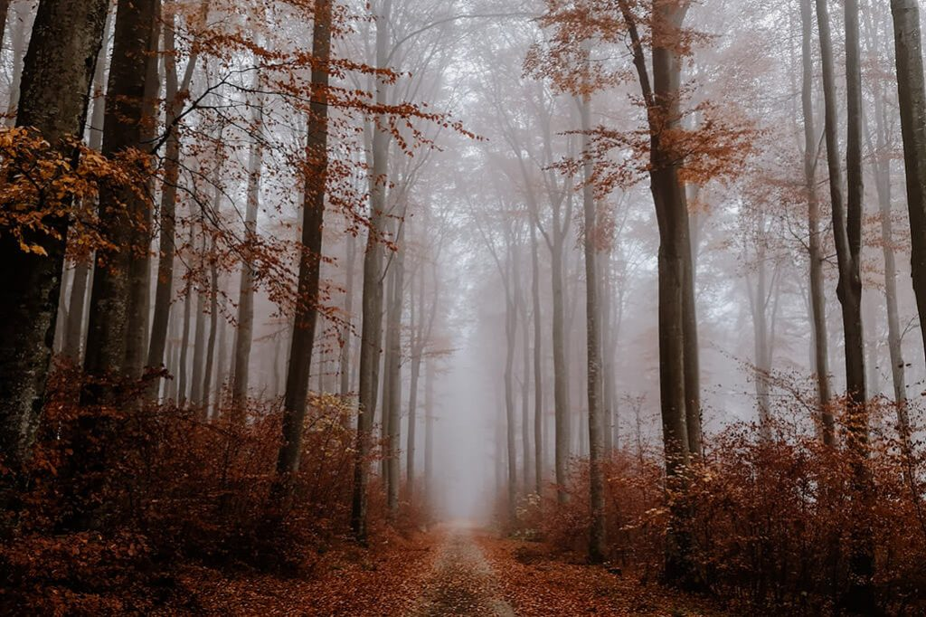 Wald fotografiert mit dem Huawei P20 Pro