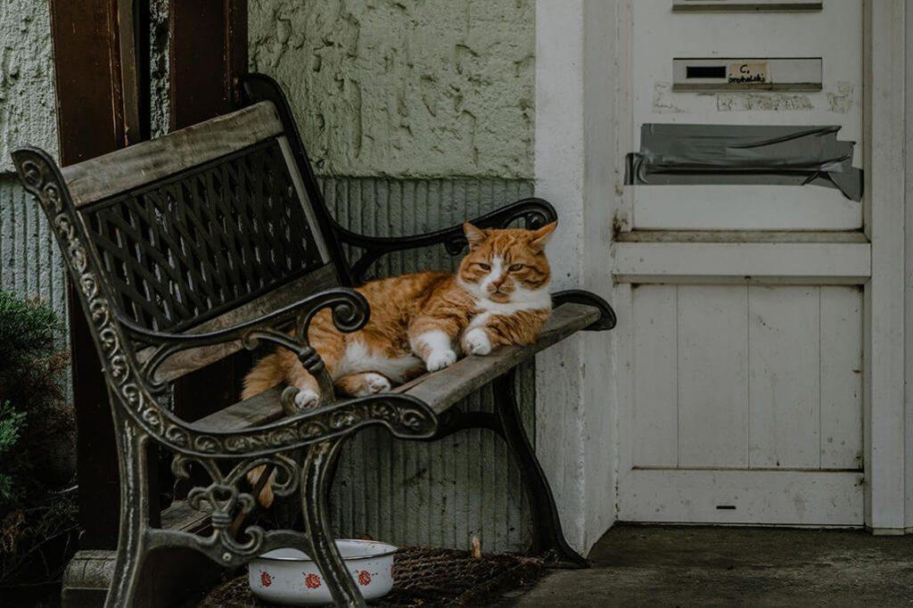 Katze in Groß Neuendorf im Oderbruch