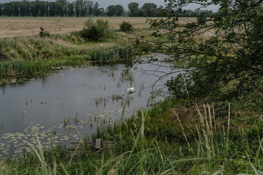 See im Delta der Oder im Oderbruch