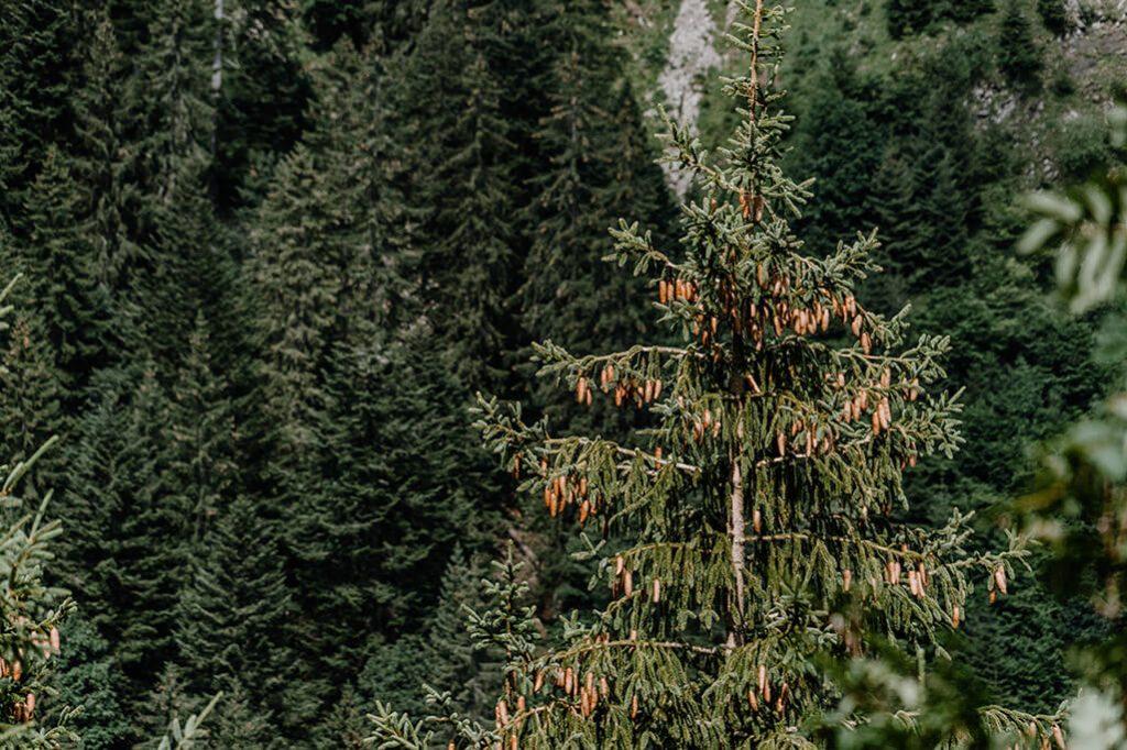 Baum im Gartner Tal in der Tiroler Zugspitz Arena