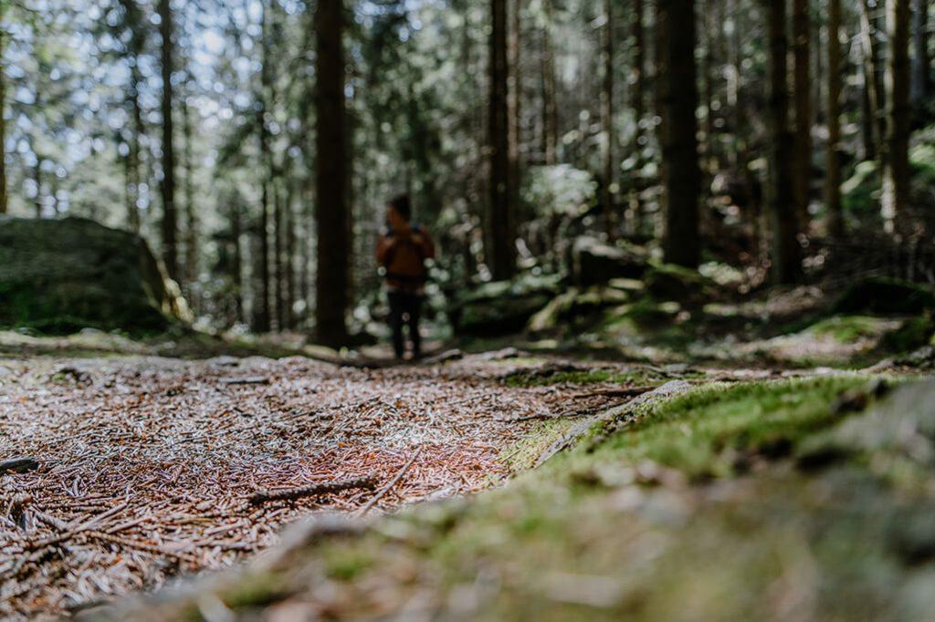 Waldweg Seensteig