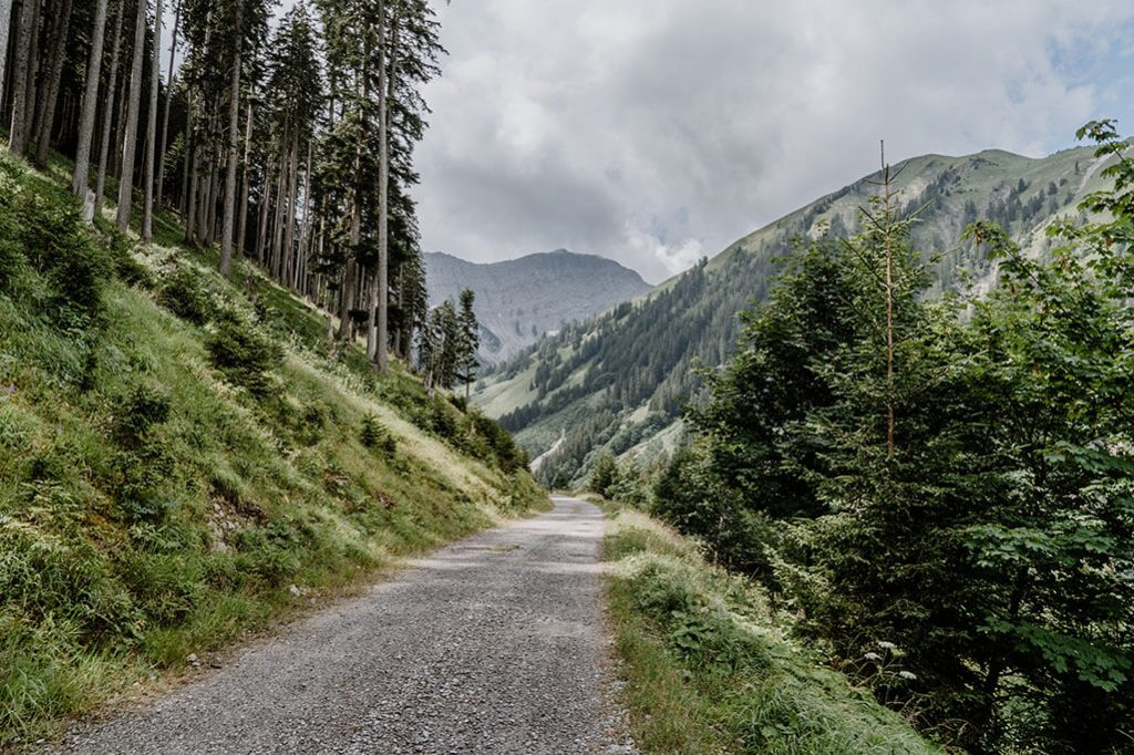 Forstweg durch das Gartner Tal in der Tiroler Zugspitz Arena