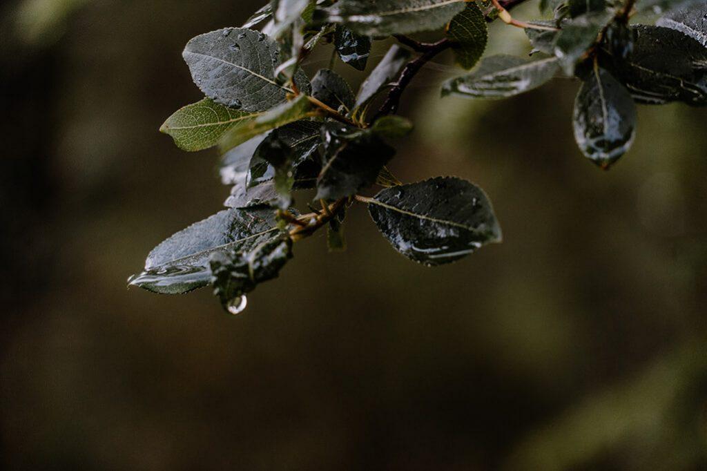 Morgentau auf Blätter
