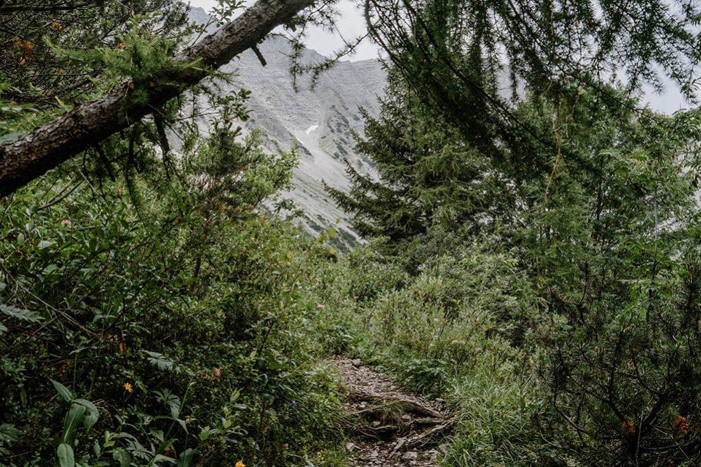 Wanderweg in der Tiroler Zugspitz Arena