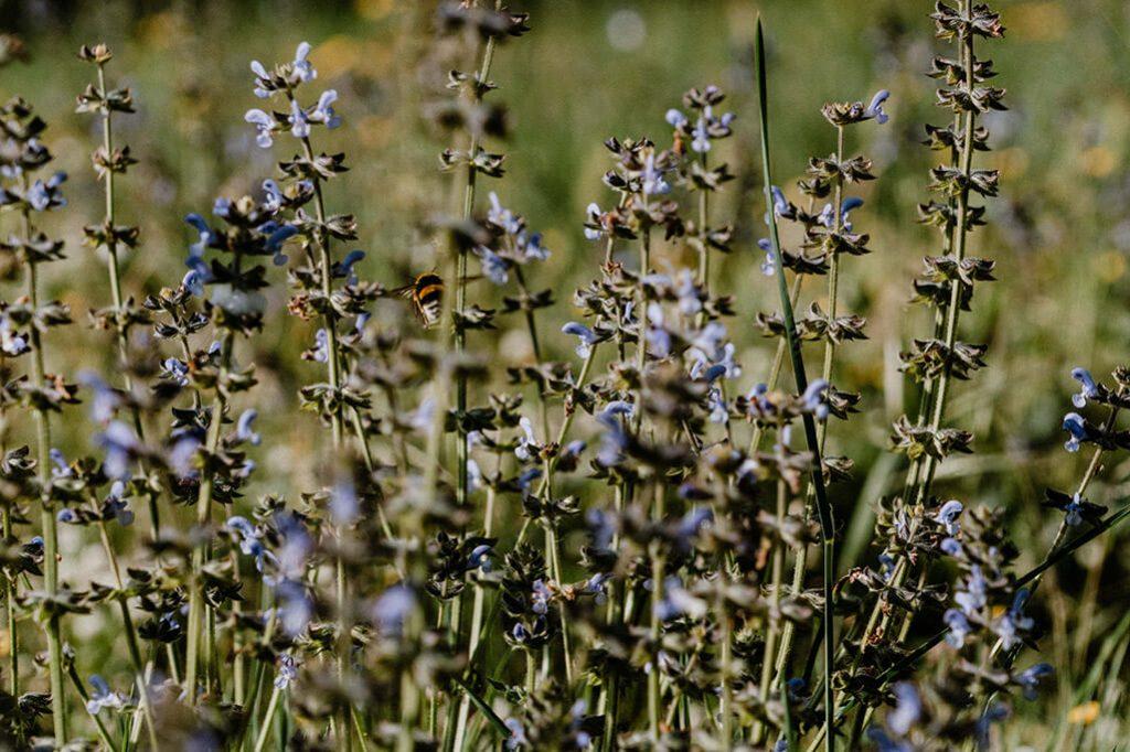Hummel auf Frühlingswiese in Spanien