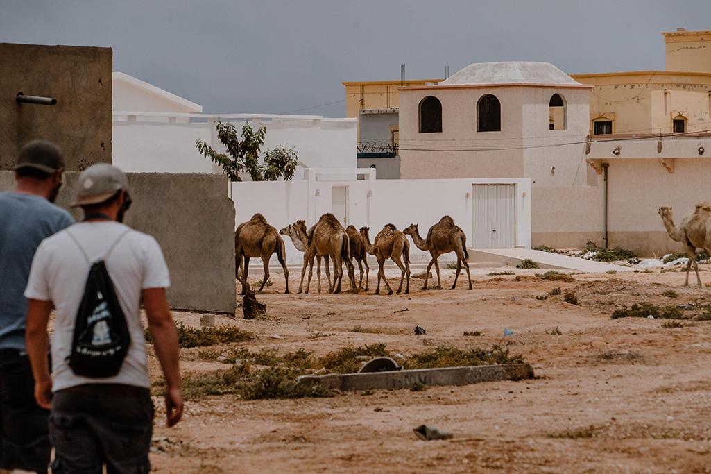 Häuser mit Kamel in Nouakchott