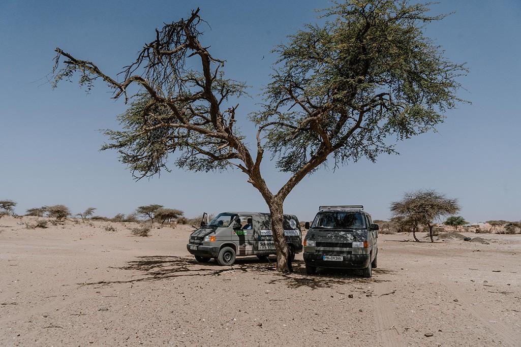 VW T4 Bus unter Baum in Mauretanien